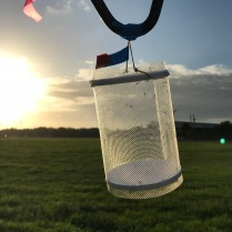 Field cage with mosquitoes